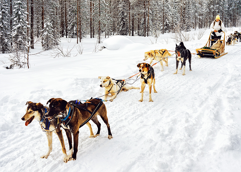 Dogsledding in Lapland, Finland