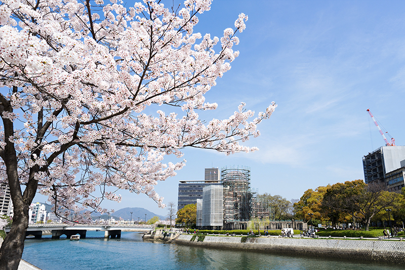 View of sakura from Hiroshima Peace Memorial Park