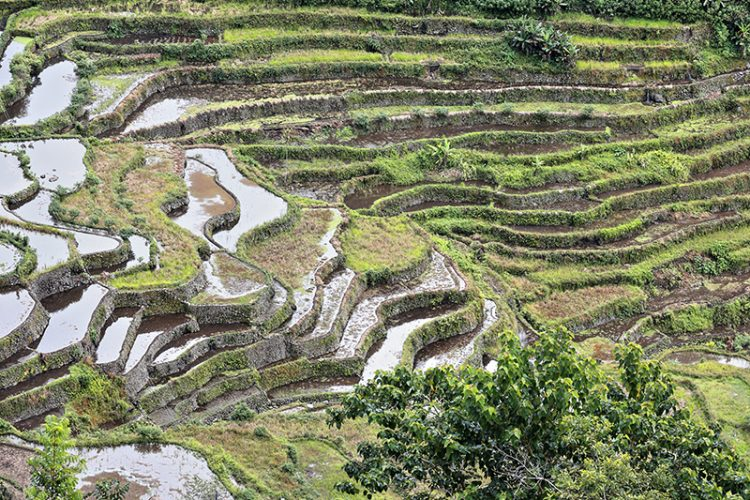 Rice Terraces of the Philippine Cordilleras, Luzon
